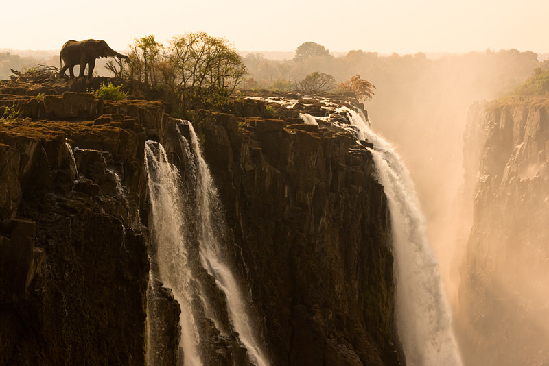 Elephant at Victoria Falls, Photography by Marsel van Oosten