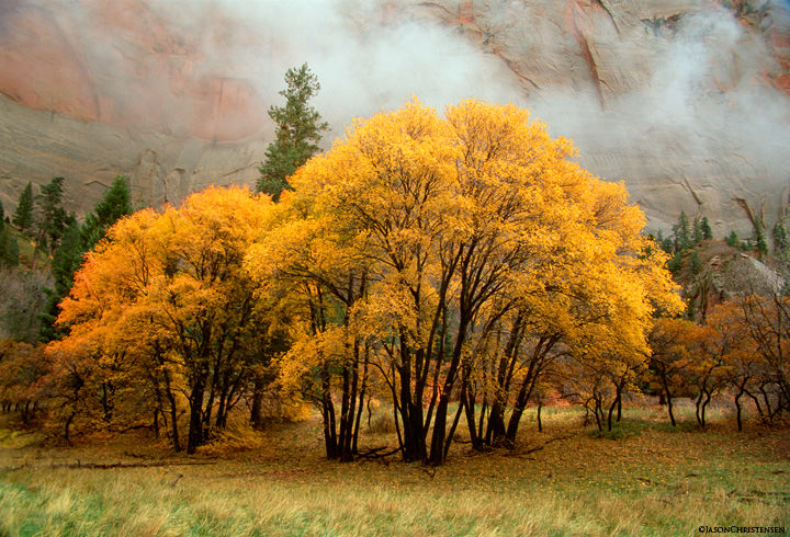 Autumn in Kolob, Kolob Finger Canyons, Zion National Park, Utah, Photography by Jason Christensen