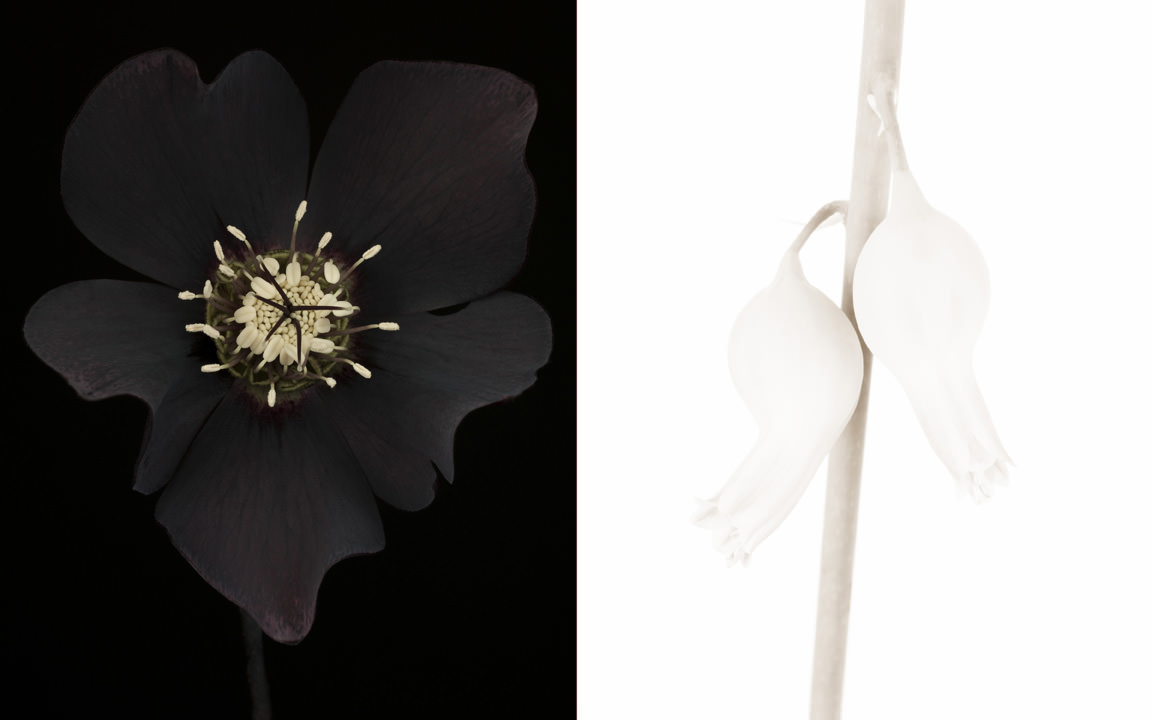 Floral Diptych, Photography by Ron van Dongen